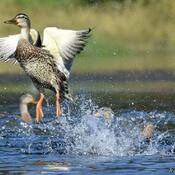 Splish & splash.....