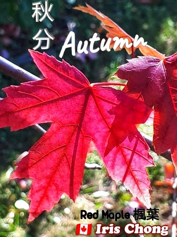 Sept 23 2021 Welcome Autumn!:) The beauty of Fall in Thornhill Thornhill, ON