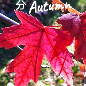 Sept 23 2021 Welcome Autumn!:) The beauty of Fall in Thornhill