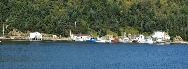 Fishing Boats Baine Harbour, NL