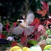 L'automne et les provisions....