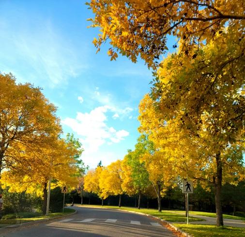 fall Saskatoon, SK