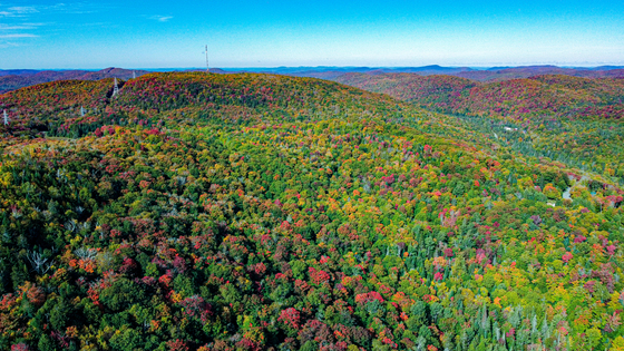boreal forest in northern quebec during the fall