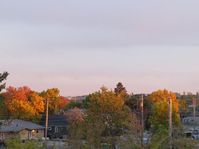 Reflective Fall Colors Weyburn, Saskatchewan