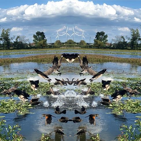 Birds of a feather Erieau, Ontario, CA