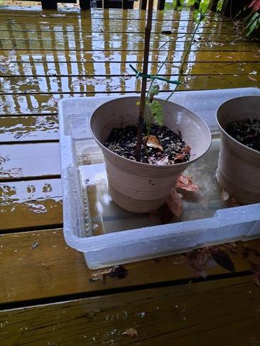 finally raining, very little precipitation this year Chambly, QC