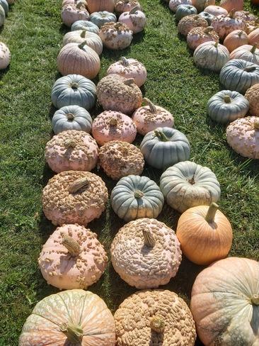 gourds Highbridge, UKK