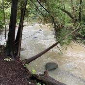 Hewitt Creek