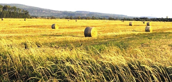 Field Oliver Paipoonge, Ontario, CA