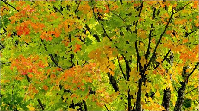 A kiss of fall, Elliot Lake. Elliot Lake, ON