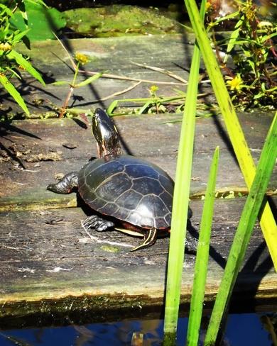Sun bathing Ingleside, ON