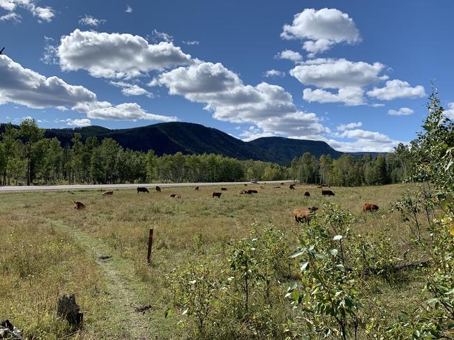 End of the trail Bragg Creek, Alberta, CA