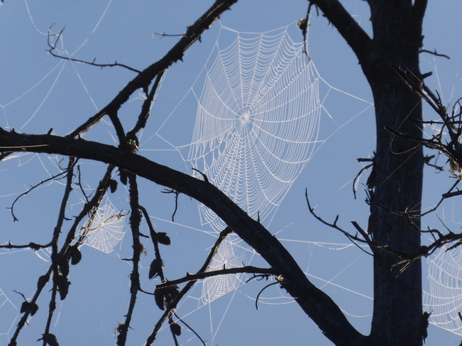 Morning sunshine on the spiders web!! French River, ON