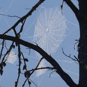 Morning sunshine on the spiders web!!
