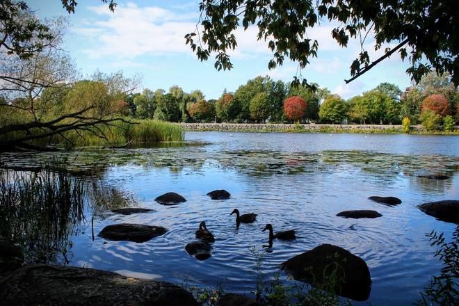 Fall colours on the Rideau river Ottawa, Ontario, CA