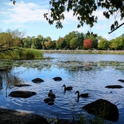 Fall colours on the Rideau river