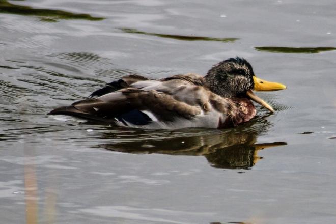 Quack Ottawa, Ontario, CA