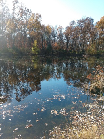 Small pond in Fall Springvale, OH