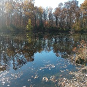 Small pond in Fall
