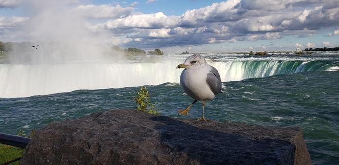 Taking in the falls. Niagara Falls, ON