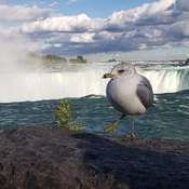 Taking in the falls.