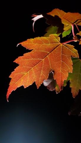 Fall Upsala, ON