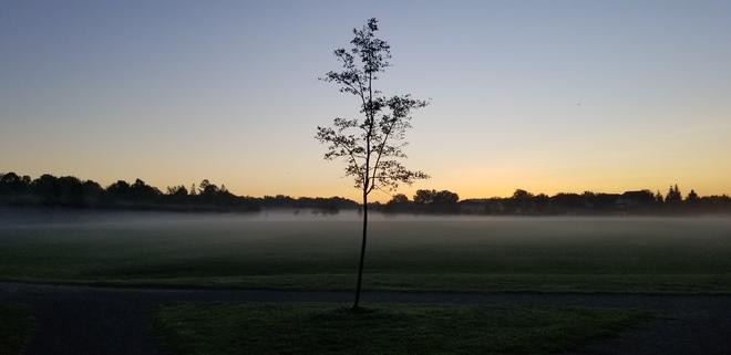 Morning fog Nepean, ON