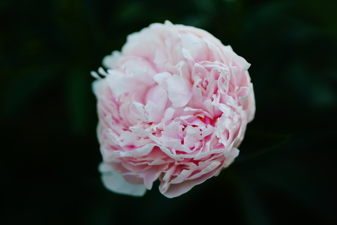 Beautiful Flower Ottawa, ON