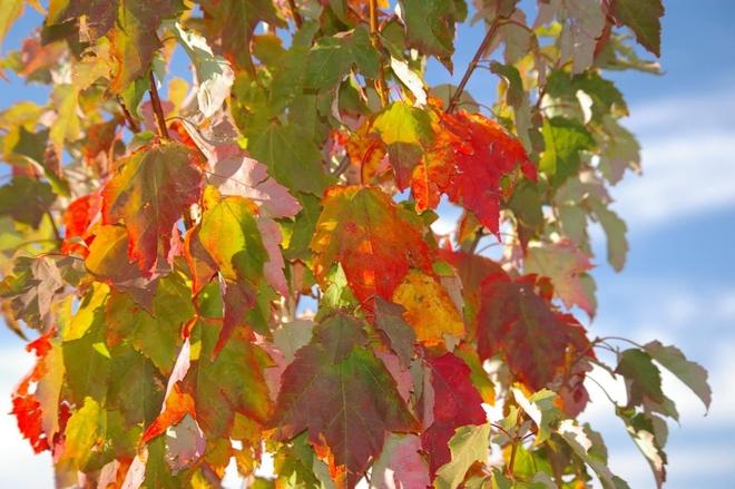 Fall colors Lacombe, Alberta, CA