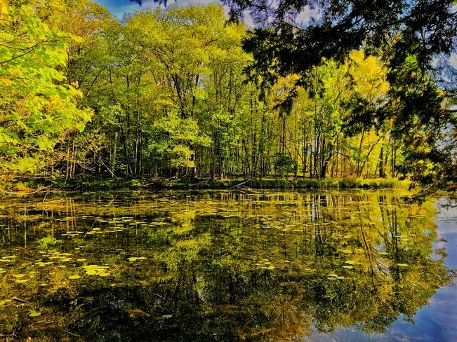 Crisp fall morning Morris Island Conservation Area, Morris Island Drive, Fitzroy Harbour, ON