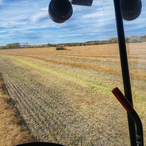 Harvest in full swing Hythe, AB