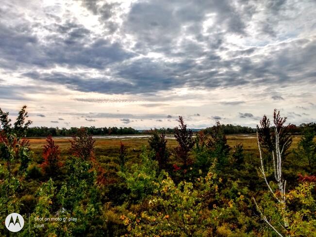 cranberry marsh Callander, ON