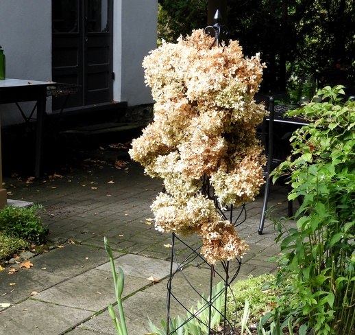 Tower of Dried Hydrangea Flowers 35 Melville St, Dundas, ON L9H 1Z7, Canada