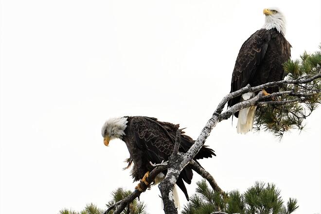 Eagles Petawawa, ON