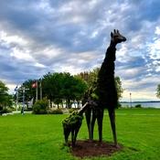Safari in Dorval!!