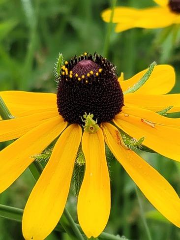 Flower Bug Innisfil, ON