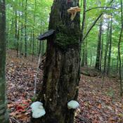 Un arbre avec différents types de champignons
