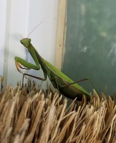 Just hanging out on a broom! Meaford, ON
