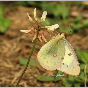 Joli papillon.