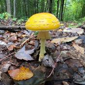 Diversité de champignons