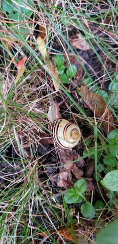 mr. snail after the rains Wexford/Maryvale, ON