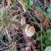 mr. snail after the rains