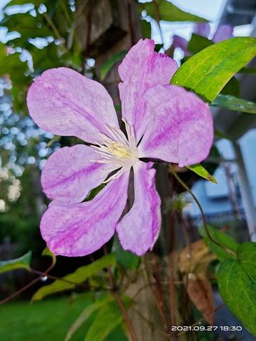 flower Surrey, BC