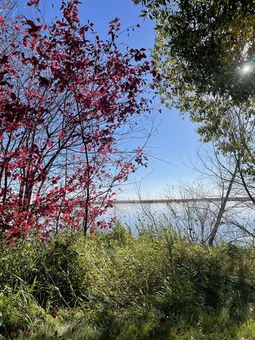 Fall in Alberta Bonnyville, Alberta, CA