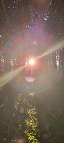 Little John's backyard forest Timmins, ON