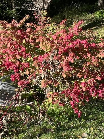Fall is here!!!!😍😊💥🤩 Manotick, Ontario, CA