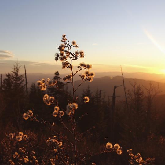 Great Smoky Mount National Park