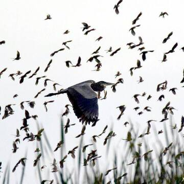 La migration...