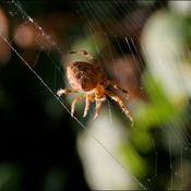 L araignée assorti...