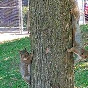 Écureuils au Parc Jarry